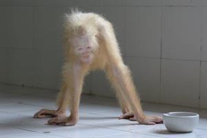 Albino Weibchen