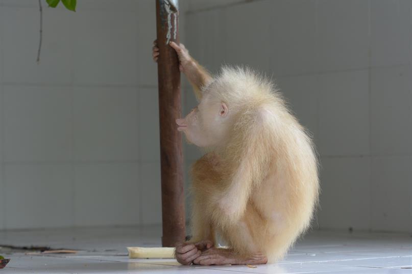 Albino Weibchen hat einen Namen!