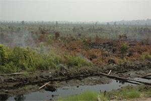 Zerstörung in Mawas