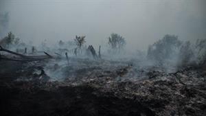 Verbrannte Erde für Jahre