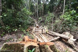 Ein Regenwald wird abgeholzt