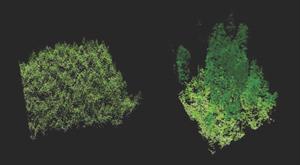LIDAR Bilder (Bild: Sarah Frey, Oregon State University, CC 2.0)
