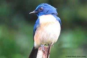 Vogelvielfalt 2