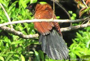 Vogelvielfalt 3