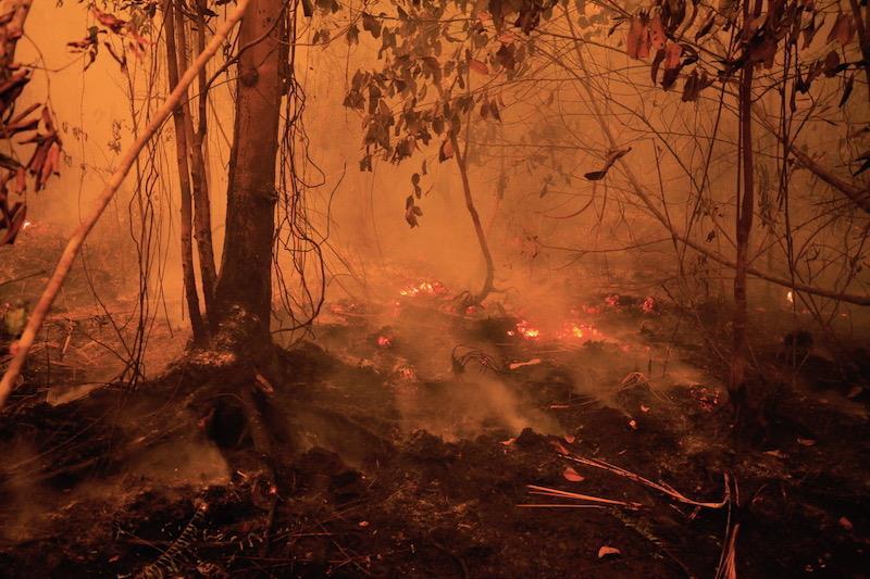 Neue Feuer nur 100 Meter entfernt – 2550 Orang-Utan-Leben in Gefahr