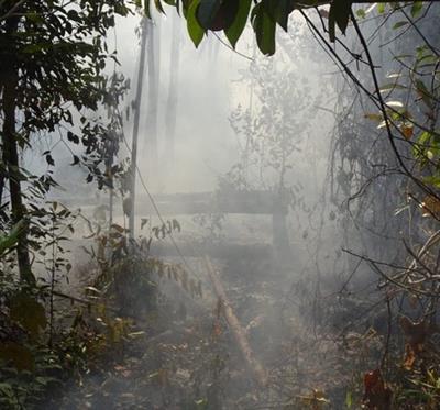 Feuer nur 100 Meter entfernt – 2550 Orang-Utan-Leben in Gefahr