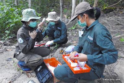 Die Orang-Utans-Auswilderung in den Schutzwald Kehje Sewen wird vorbereitet