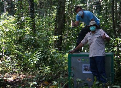 Moritz erlebte seine erste Orang-Utan-Auswilderung