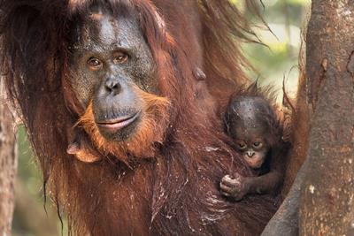 Mutter-Kind-Beziehung