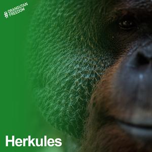 Herkules – der Starke