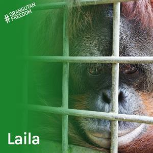 Laila hat Unglaubliches in ihrem Leben geschafft