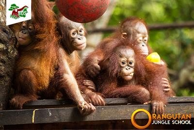 Orang-Utan Jungle School