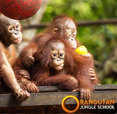 Orang-Utan Jungle School