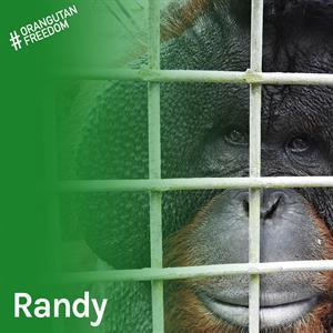 Randy – der Lebendige