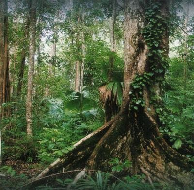 Regenwald-Schutz ist Orang-Utan-Schutz