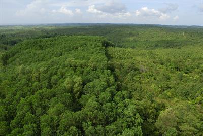 Ein Lichtblick für den Regenwald