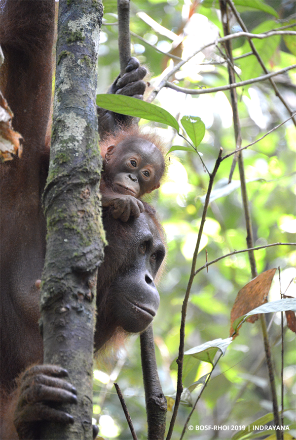 Buntok & ihr Baby Borneo in TNBBBR