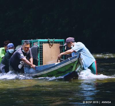 Freiheit für 17 Orang-Utans – die grösste Auswilderung der letzten Jahre