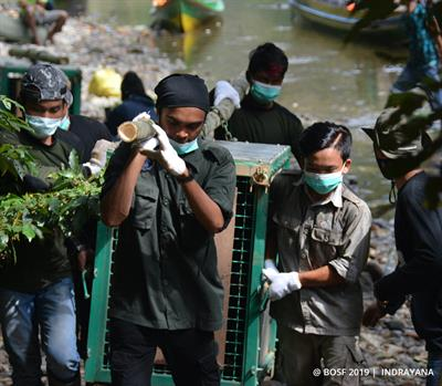 9 Orang-Utans im Nationalpark in Freiheit entlassen