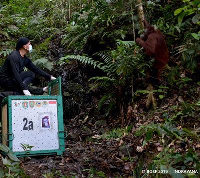 Ständige Beobachtung der Tiere nach der Auswilderung