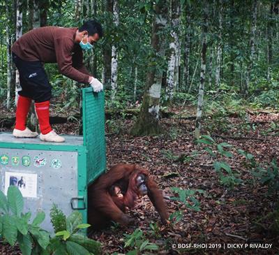Ehemalige Zootiere aus Jakarta ausgewildert