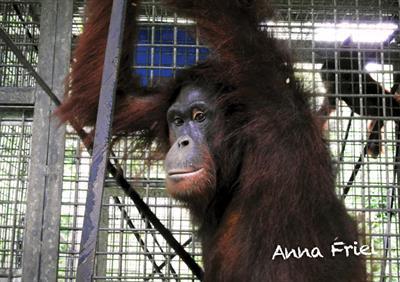Anna Friel wird in den nächsten Tagen im Schutzwald Kehje Sewen (KJ7) sein