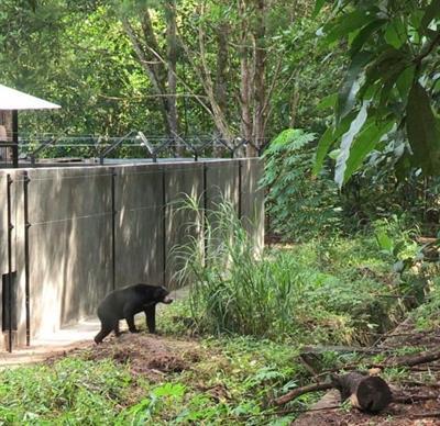 Bearinmind - grösstes Bärenschutzprogramm der Welt