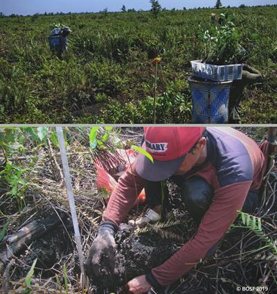BOS Mawas-Team schützt mehr als 309 000 Hektare Torfmoorwald