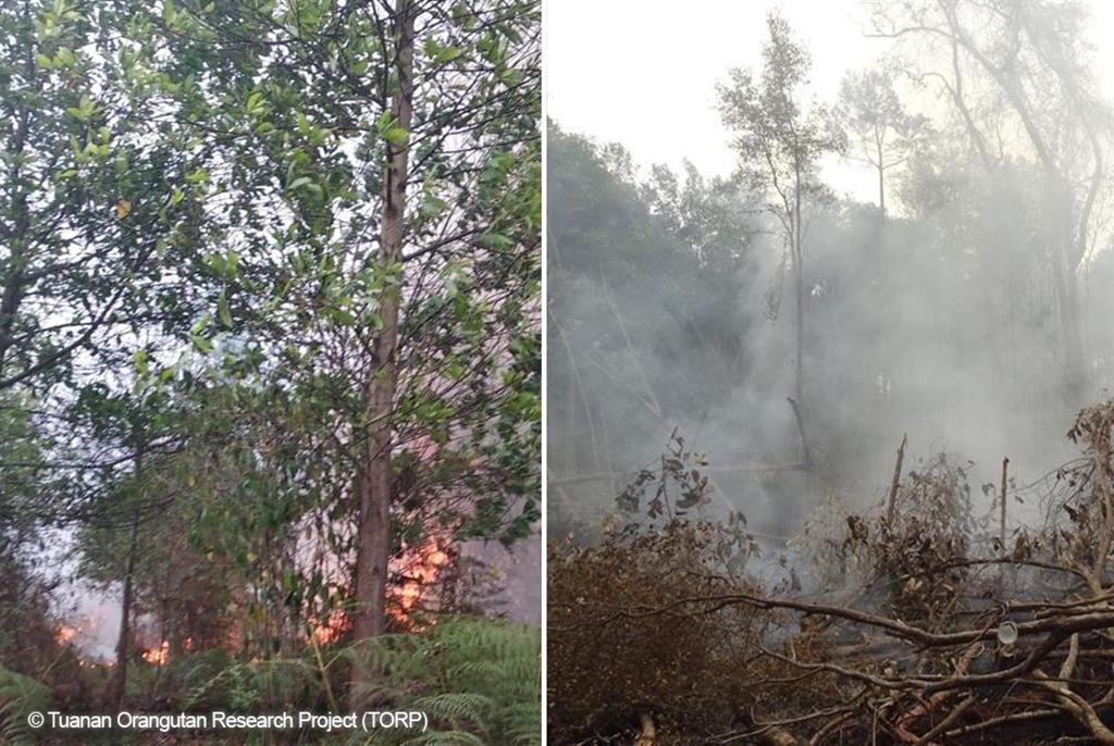 Neue Feuer – nur 400 Meter entfernt – bedrohen unsere Tuanan Research Station.