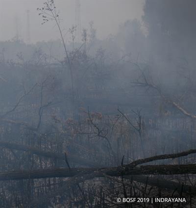Die Waldbrandsaison hat begonnen