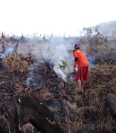 Das Feuer frisst sich durch den Regenwald