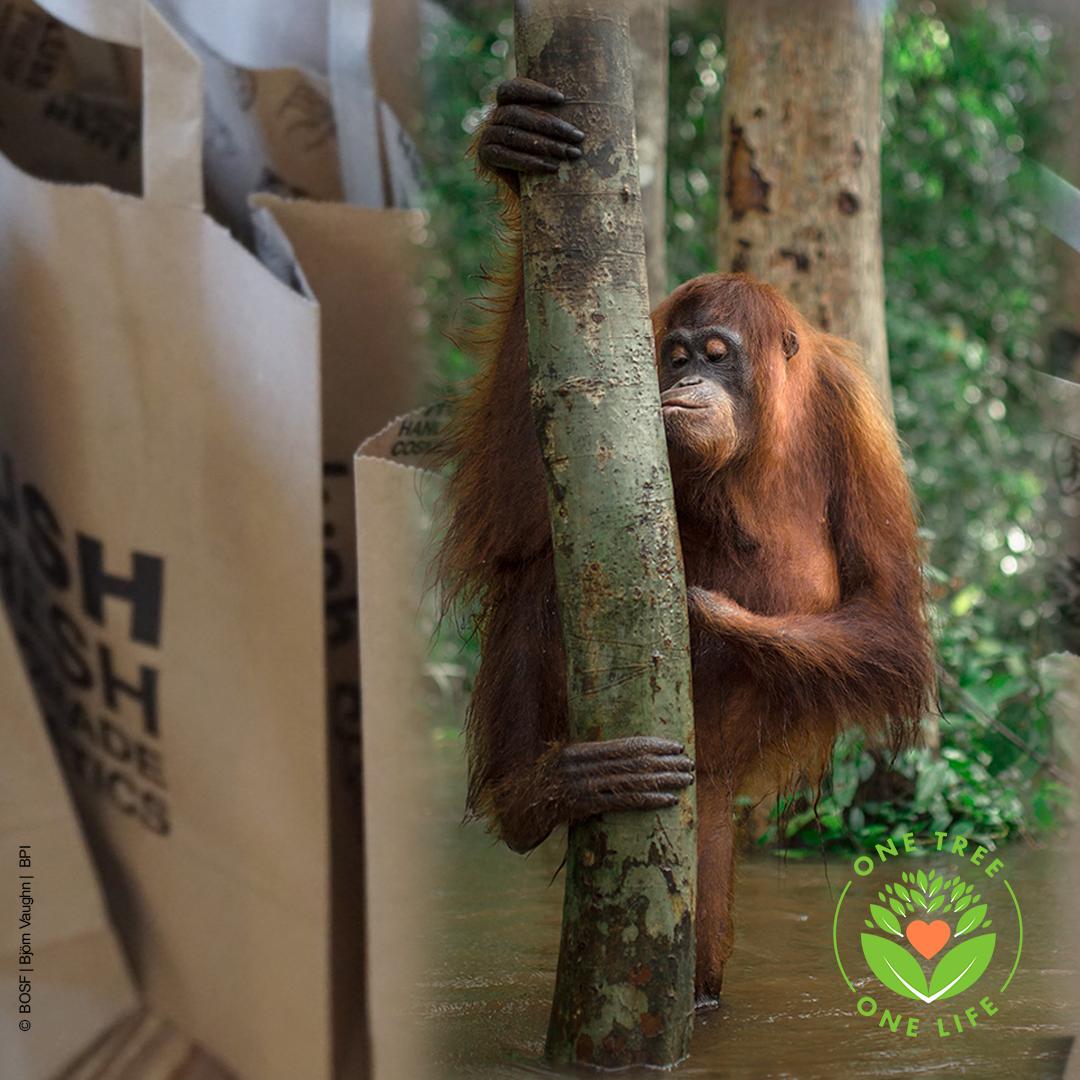 BOS Schweiz – Partnerschaft mit LUSH für die Aufforstungs-Kampagne One-Tree-One-Life von BOS Schweiz