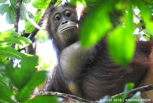 Nobri ist ein echtes Energiebündel und hat sich im Regenwald bestens eingelebt.