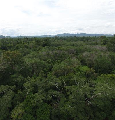 Bäume reduzieren die Klimabelastung