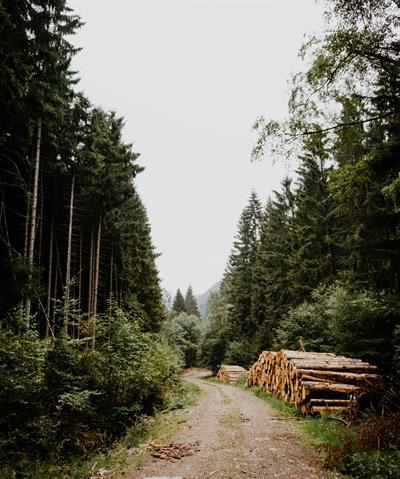 Schweizer Wald