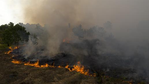 Seit Juli brennt der Regenwald