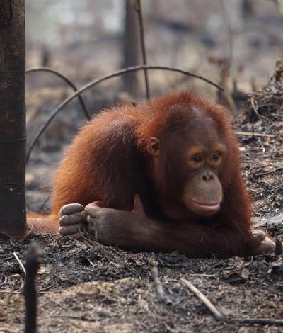 Brandherde in Indonesien
