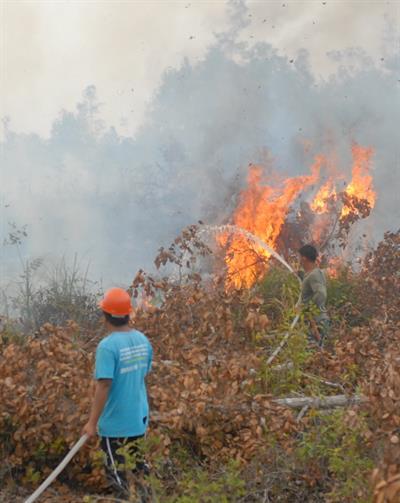 Waldbrände: In sechs Provinzen von Indonesien wurde der Notstand ausgerufen