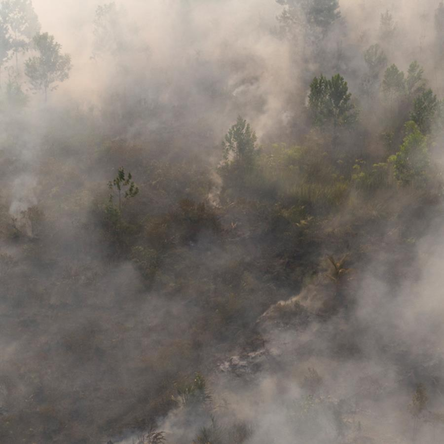 Brände im Mawas-Gebiet: Qualm