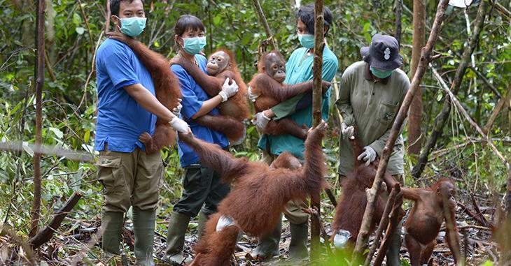 Gruppenbild mit Pfleger*innen und jungen Orang-Utans