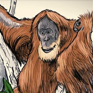 Illustration eines Orang-Utans