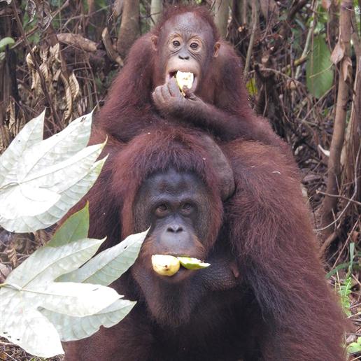 Mama Merin mit ihrem Sohn Marlon