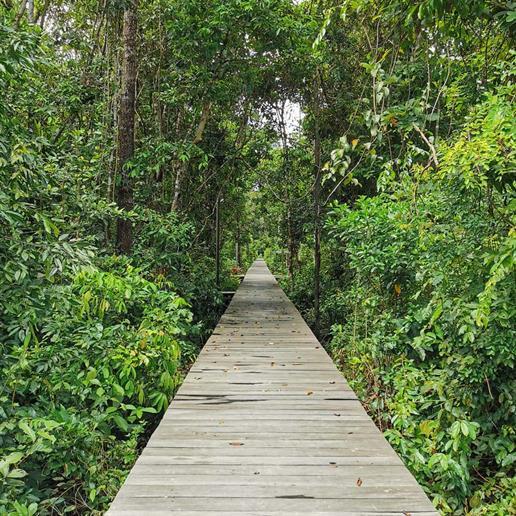 Holzsteg auf Salat Island