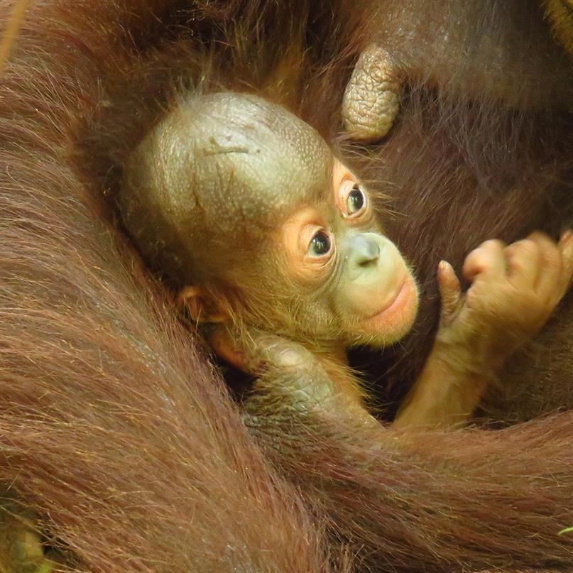 Mutter Signe mit Baby