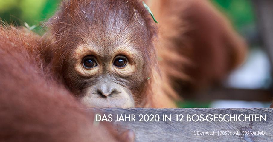 Visual: Das Jahr 2020 in 12 BOS-Geschichten