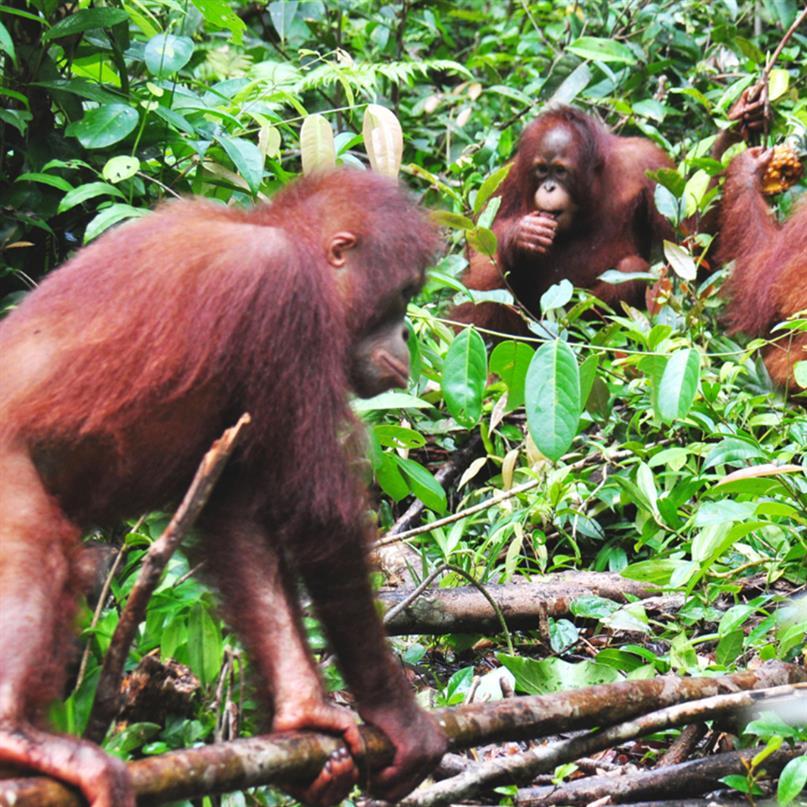 Für die Waldschulgruppe gibt es viel Spannendes zu entdecken