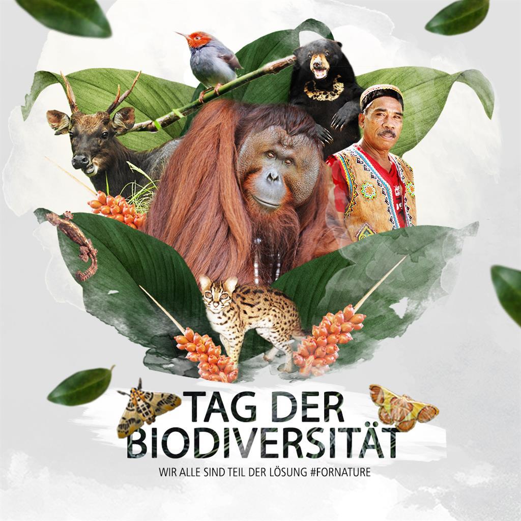 Visual Biodiversität
