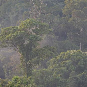 Regenwald in Zentral-Kalimantan