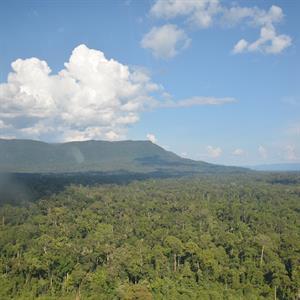 Regenwaldgebiet in Zentral-Kalimantan