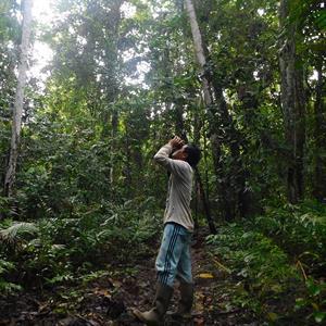 Vogelbeobachtung auf der Insel Juq Kehje Swen